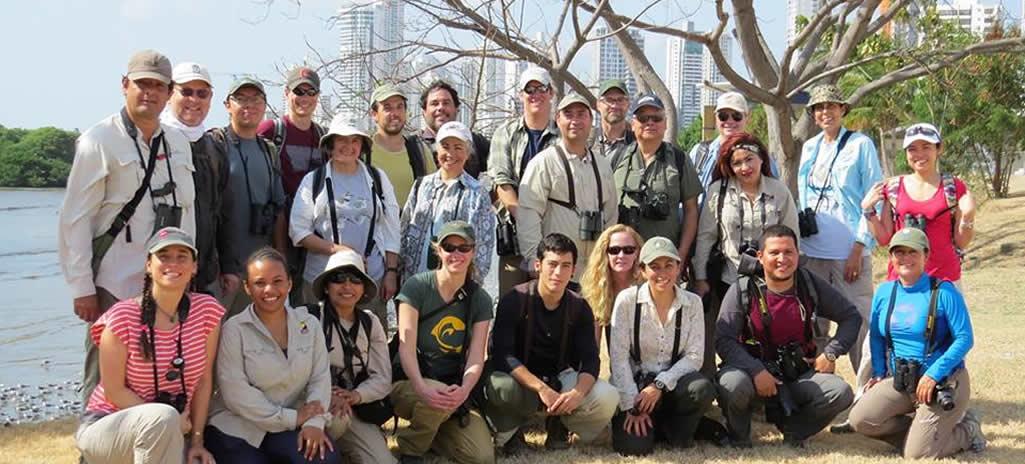 Expertos de las Américas de aves playeras se reúnen en Panamá